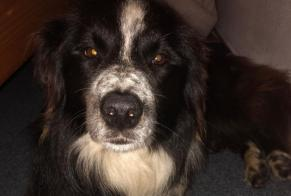 Discovery alert Dog Unknown , 3 years Sonnenalpe Nassfeld Austria